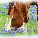 Bluebonnet Visions by Marita Sutherlin