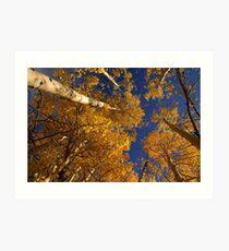 Fall Aspens  Rabbit Ears Pass  Colorado Art Print