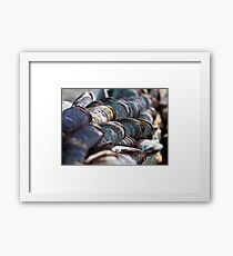 Sea Coloured Mussels Framed Print