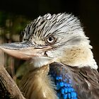 BLUE WINGED KOOKABURRA by Marilyn Grimble