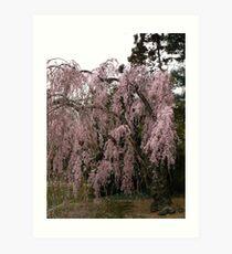 Weeping cherry Art Print
