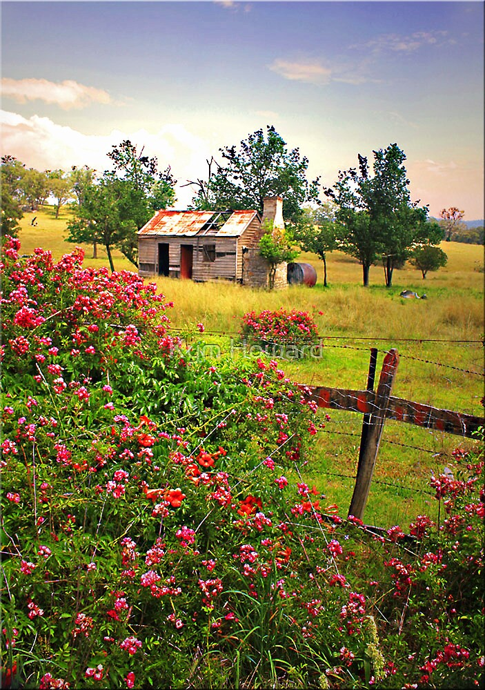 Rambling Roses by Kym Howard