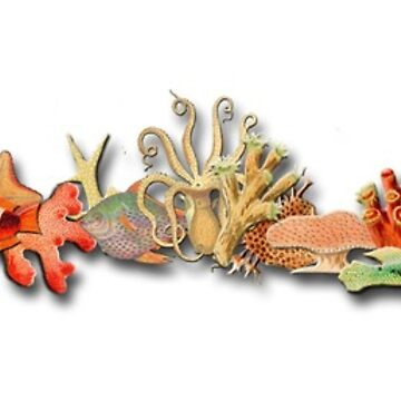 Tropical fish and coral border vintage sketches by ACoetzer