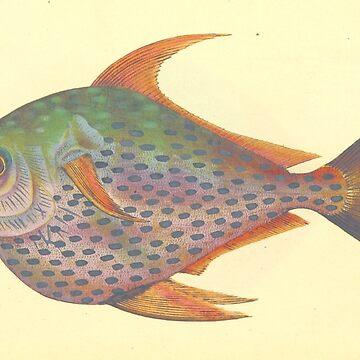 Vintage sketch of tropical fish reprint by ACoetzer