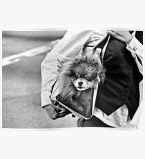 Yuppie Puppy Poster