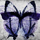 The butterfly Fx by Orlando Rosado