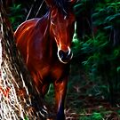 In The Forest by laureenr