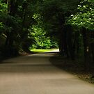 Green Tunnel Drive by HoremWeb