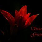 Seasons Greetings by laureenr