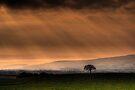 Sunburst on the Carse of Stirling 2 by David Mould