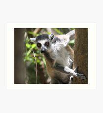 Curious Lemur ~ landscape Art Print
