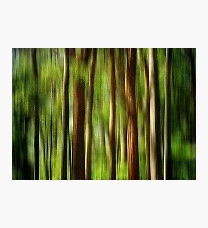 Rainforest Photographic Print