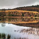A Tarn in Grizedale by Jamie  Green