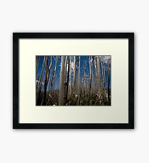 Standing tall, life goes on Framed Print