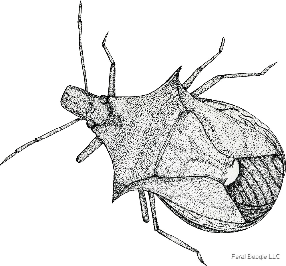 Stink Bug Pen and Ink by Feral Beagle LLC