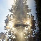 A Little ray of Sunshine - Magpie Springs - Adelaide Hills Wine Region - Fleurieu Peninsula - South Australia by MagpieSprings