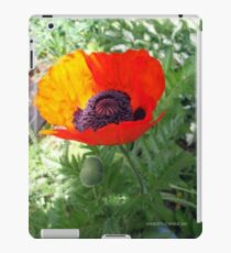 First Poppy of the Season in Mo's Garden 4 iPad Case/Skin