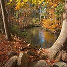 Pennypack Creek in Fall by David Lamb