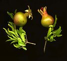 Mini Pomegranates by Barbara Wyeth