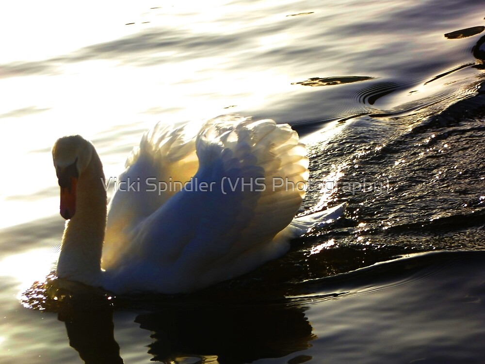 Pure Beauty by Vicki Spindler (VHS Photography)