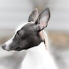 I Hear Everything with These Ears by eegibson