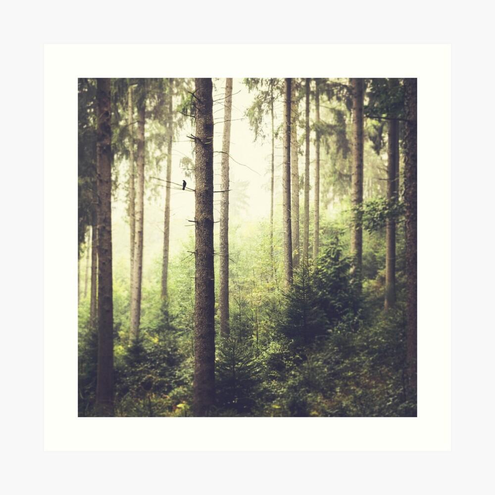 Morning Song - Misty Forest Art Print
