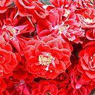 Dashing Roses by Sviatlana