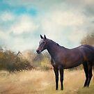 Misty Shadow NZ. von Lyn Darlington
