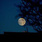 An Evening Moon... by Larry Llewellyn