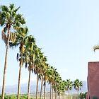 Tenerife Palm Trees by danachirps