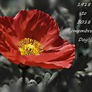 Remembrance Day! by Poete100