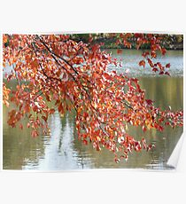 Autumn Leaves over Water Poster