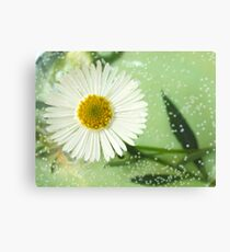 Because I Love You - He picks me flowers everyday Canvas Print
