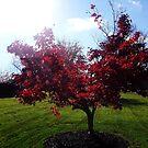 AUTUMN RAVISHING RED  by JoAnnHayden