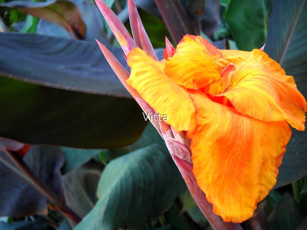 Yellow -Red flower. by Vitta