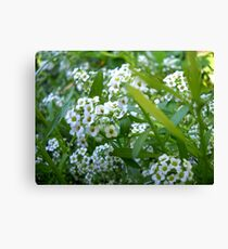 Small flowers. Canvas Print