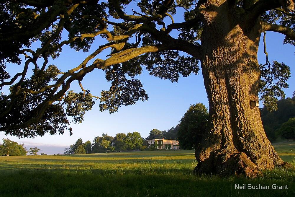 Devon View by Neil Buchan-Grant