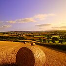Haybales at Sunset by Neil Buchan-Grant