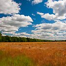 Yorkshire fields by Neil Buchan-Grant