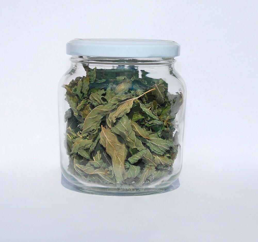 Dried Peppermint In Jar   by jojobob