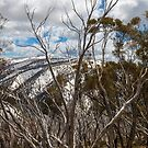 Mountains Reach The Sky..Alpine National Park. by mitpjenkeating