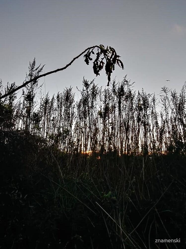 #plant #leaf #morning #grass #landscape #tree #sky #nature #outdoors #wood #environment #weather #vertical #branch #plantpart #nopeople #sunrise #dawn #light #naturalphenomenon #nonurbanscene #day by znamenski