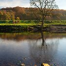 North Yorkshire river view by Neil Buchan-Grant