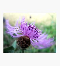 Wild Thistle in the Wind Photographic Print