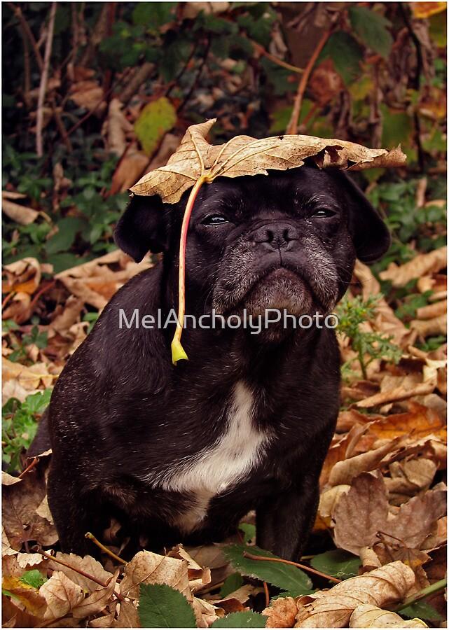 [ new autumn hat fashion ] by MelAncholyPhoto