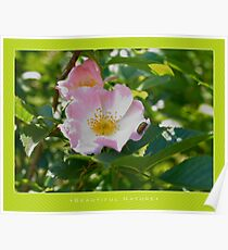 Macro: Beautiful  Nature - 1 Poster