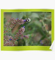 Macro: Beautiful  Nature - 4 Poster