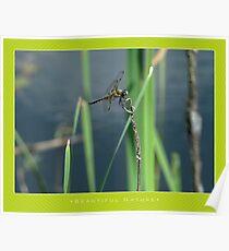 Macro: Beautiful  Nature - 5 Poster