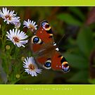 Macro: Beautiful  Nature - 6 by houk