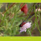 Macro: Beautiful  Nature - 8 by houk
